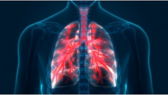 news - 11164-lungs-tease.jpg