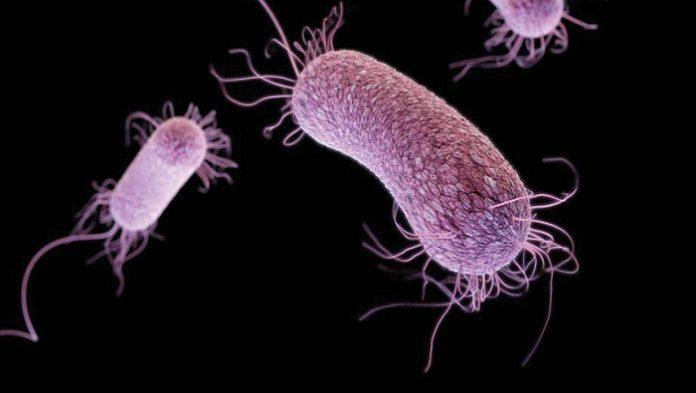 pressreleases - 10713-pseudomonas-aeruginosa.jpg