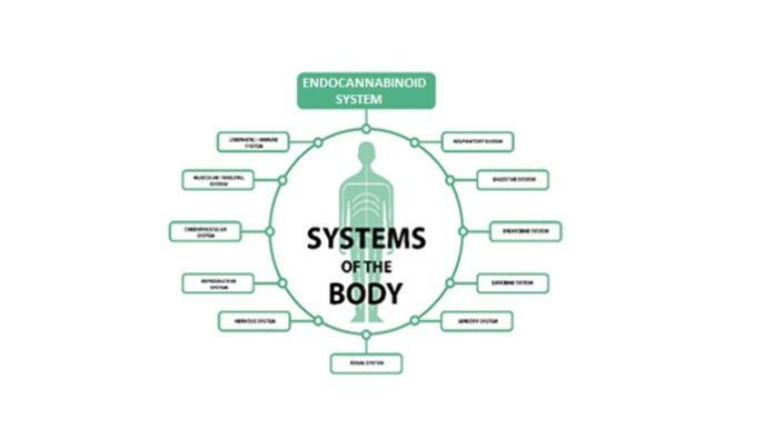 The Endocannabinoid System, Unlocked