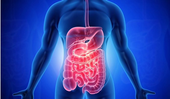 How Your Diet Affects Your Gut Health
