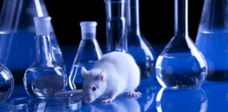 How ACE2 Transgenic Mice Are Helping The Fight Against COVID-19