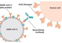 Siemens Healthineers Collaboration with CDC Will Define Threshold for Neutralizing Antibody Sufficient to Confer Immunity